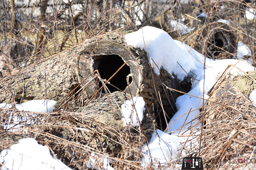 Easter Bunny door, fallen logs, rotted tree stumps, rotted logs