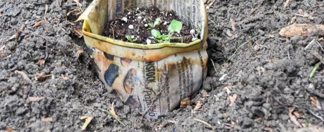 Starting seeds in newspaper pots, planting seeds, biodegradable pots, plantable pots