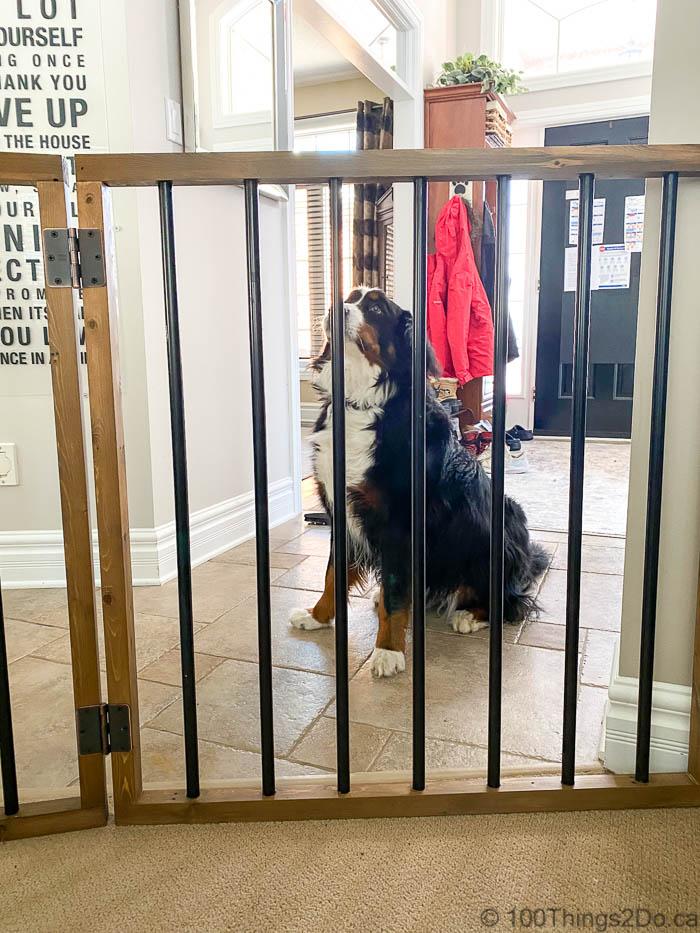 Pet gate, simple pet gate, freestanding pet gate, DIY pet gate