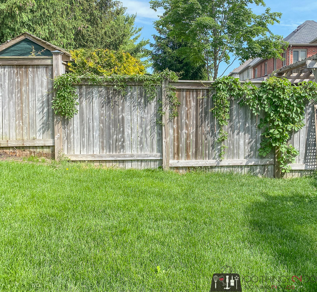 pressure treated fence with boston ivy