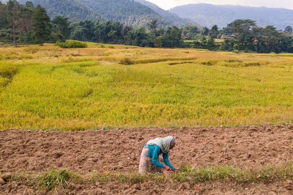Old woman working on the field, Nepali village