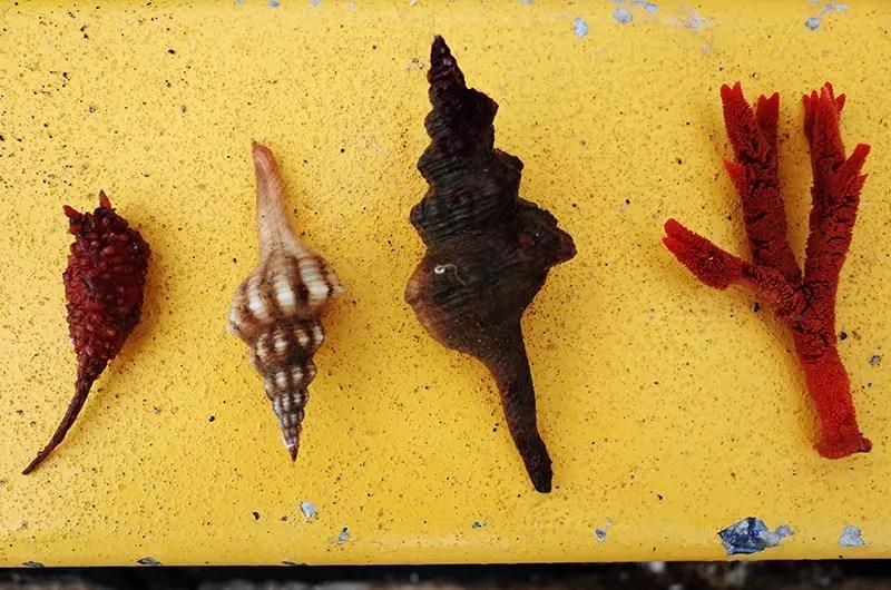 Shells and corals
