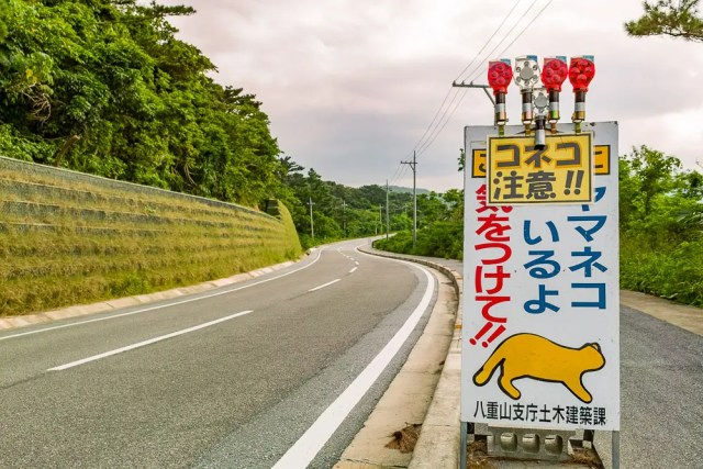 Iriomote cat road sign