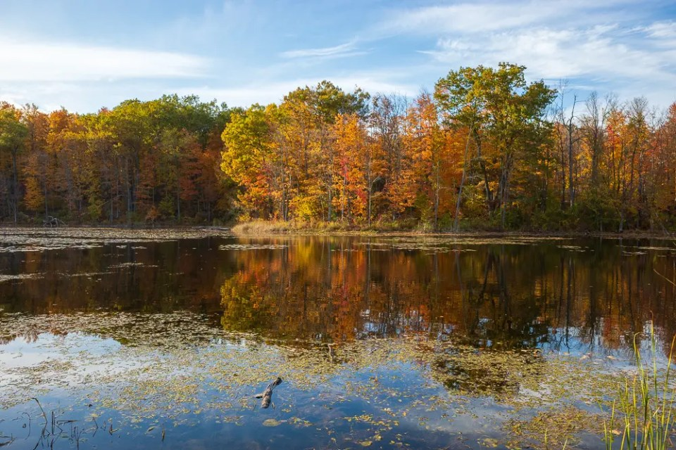 Forest reflection in the lake, Ontario, fall