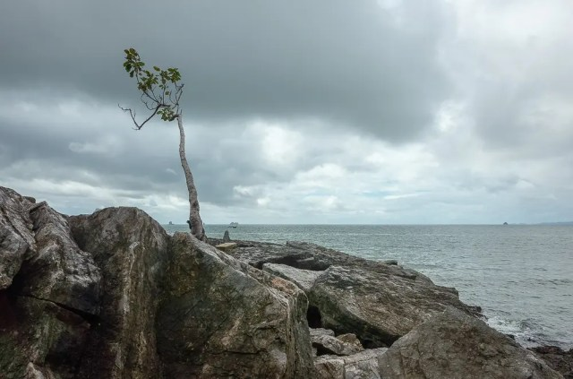 Lonely tree in the storm
