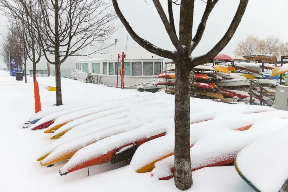 Kayaks covered by snow