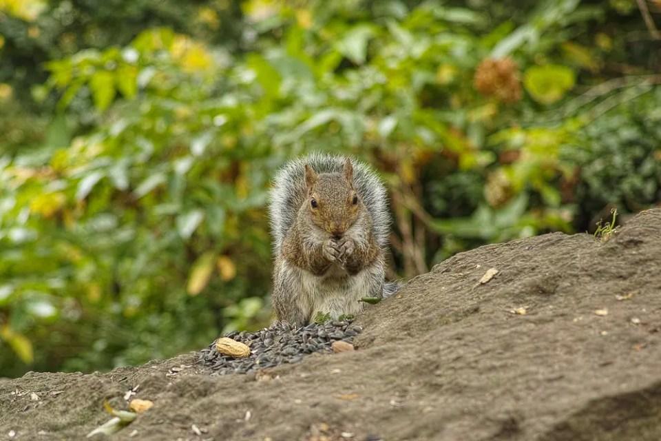 Squirrel in High Park, Toronto
