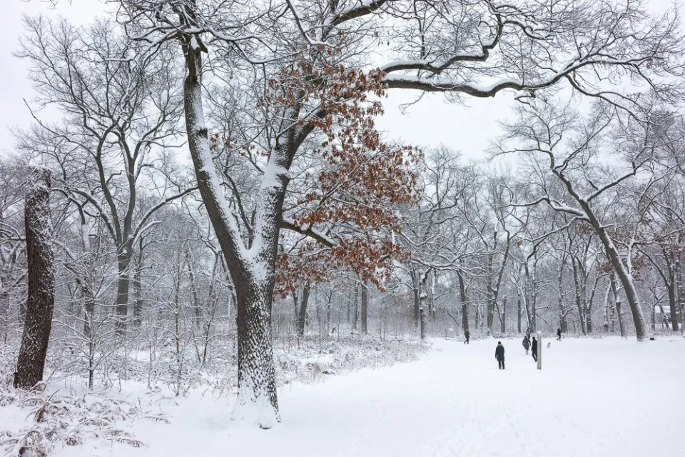 Winter in High Park