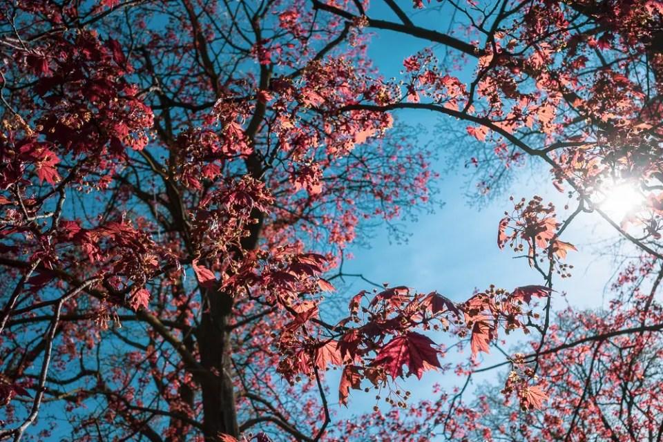 Spring in High Park, Toronto