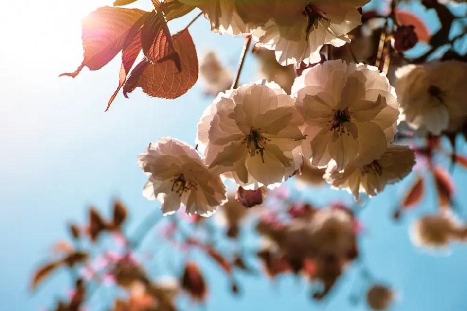 Petals and shades