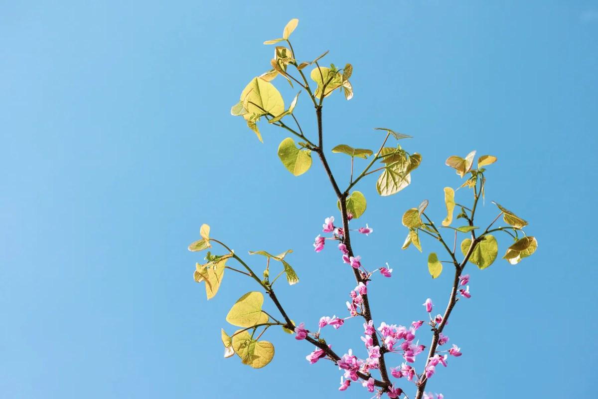 Spring in High Park