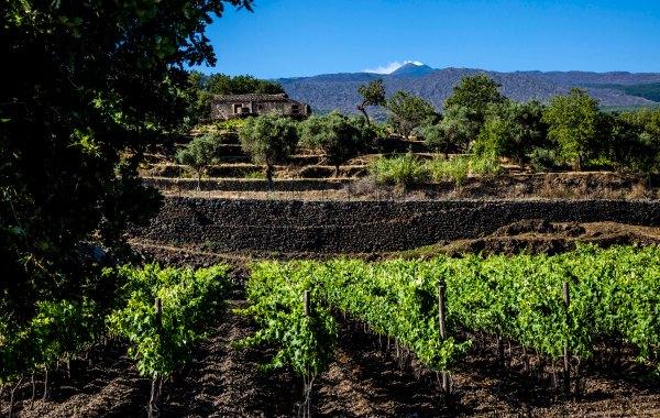 Passopisciaro, patria del vino