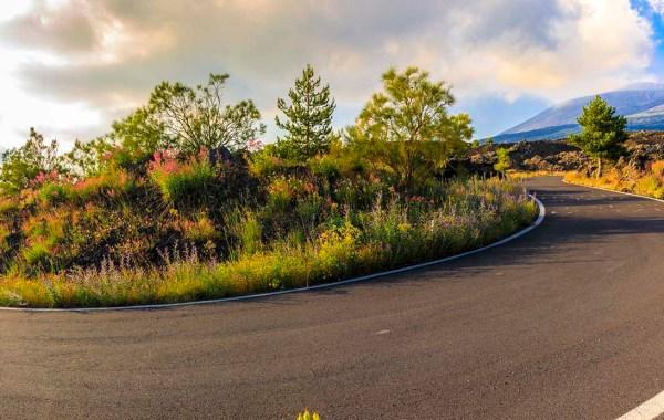 Etna, la strada della Milia in fiore