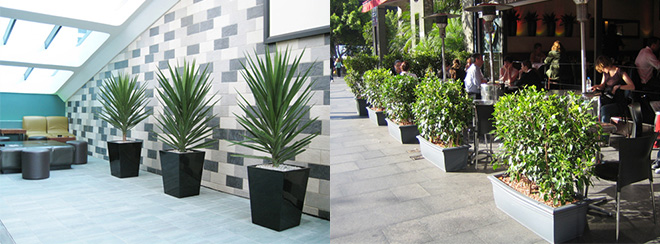Indoor Plant Hire Sydney
