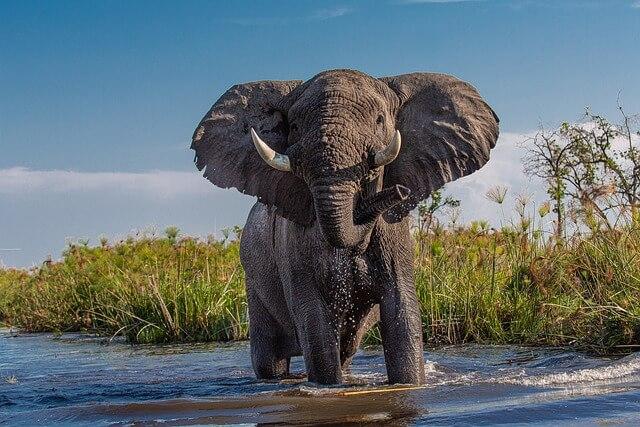 象と大空と