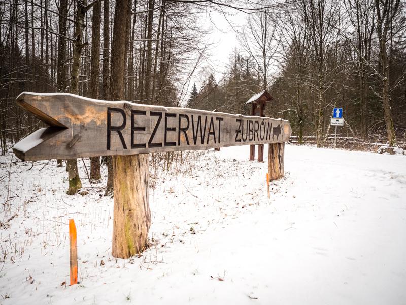 Rezerwat Żubrów w Białowieży