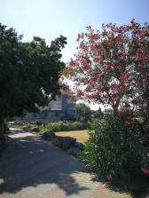 Ginosar Garden 300518