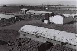 amir kibbutz