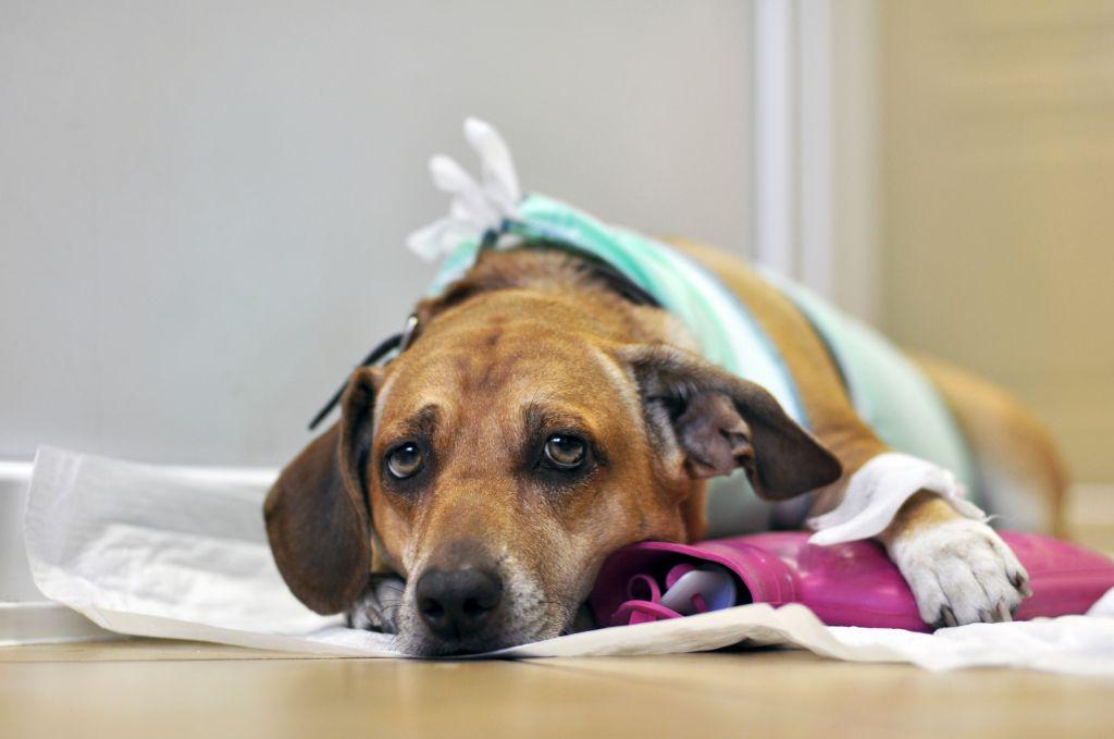 Регулярное посещение ветеринара залог долгой жизни