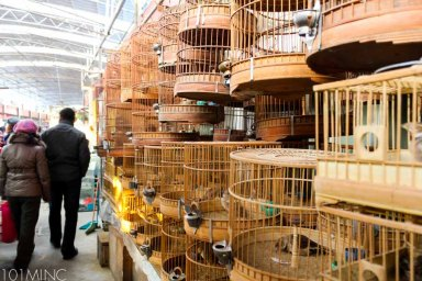 shanghai birds market-2