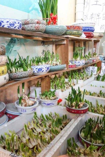 shanghai birds market-7