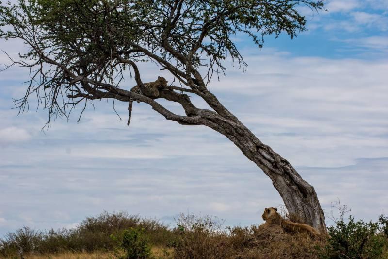 Масай Мара, Кения