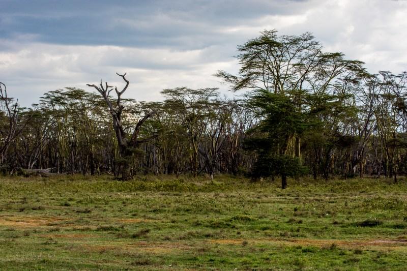 Горичките на националния парк в Накуру, Кения