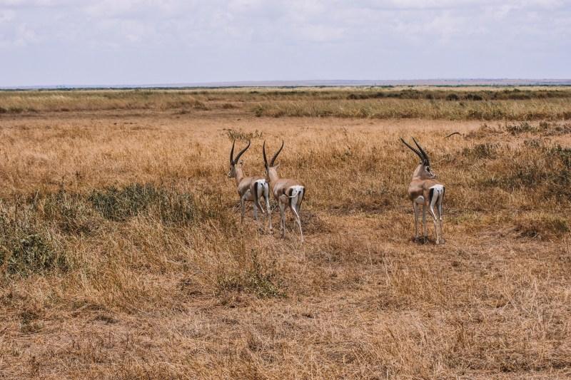Национален парк Амбосели, Кения