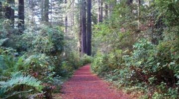 #24 – Redwood Hiking Trails