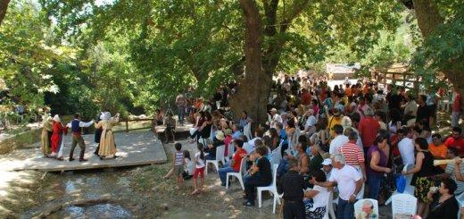 ΑΛΩΝΕΜΑΤΑ 2019 στη Καλαμαύκα