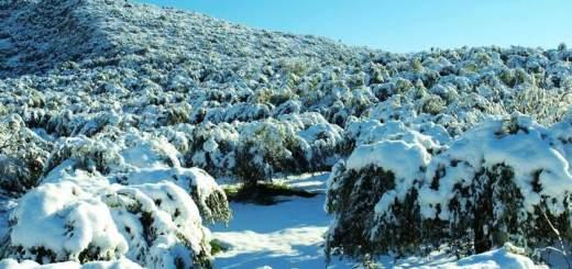 ζημιές στην αγροτική παραγωγή από το χιονιά, αίτημα Κεφαλογιάννη