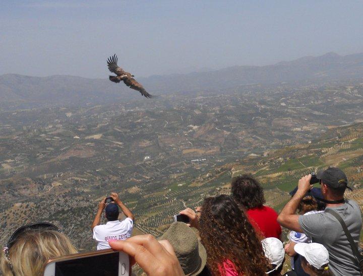 Απελευθέρωση άγριων πουλιών για τον εορτασμό της Παγκόσμιας Ημέρας Βιοποικιλότητας
