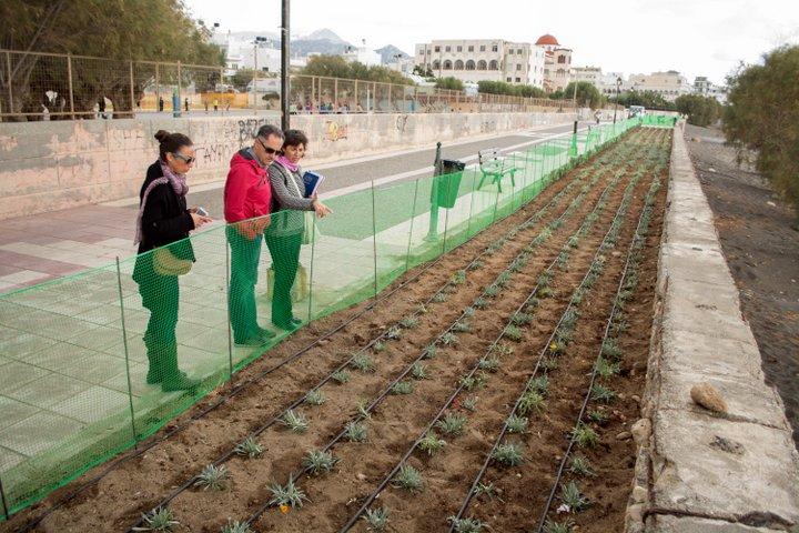 Ολοκληρωμένες Παρεμβάσεις Πρασίνου Υλοποιεί ο Δήμος Ιεράπετρας. Φυτεύονται 3000 ποώδη φυτά, , 1740 θάμνους  και 360 νέα δένδρα