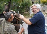 φροντίδα ιπποειδών