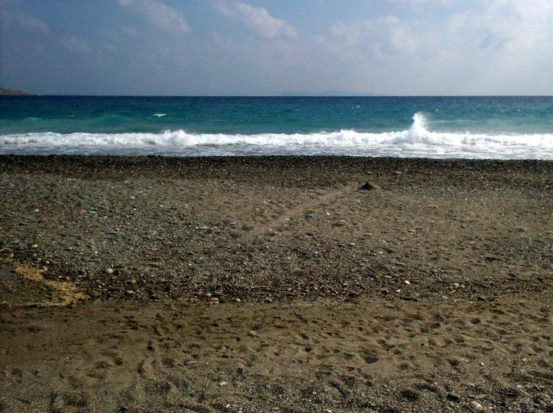 ίχνη θαλάσσιας χελώνας caretta caretta όταν βγήκε στην παραλία της Σητείας για να γεννήσει τα αυγά της