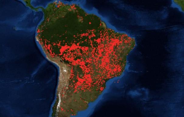 Αν τα δάση ήταν τράπεζες θα τα σώζαμε …
