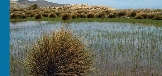 Οι υγρότοποι στο νησί μου: πώς μπορώ να αναγνωρίσω