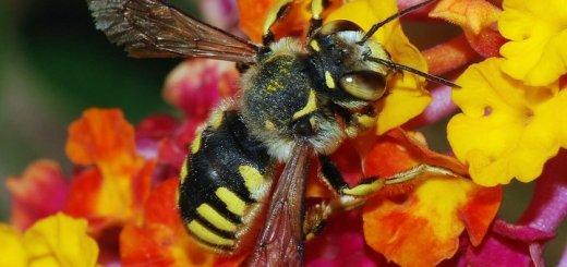 Μελισσοκομικός Σύλλογος Λασιθίου γενική συνέλευση
