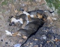 dead_dogs2