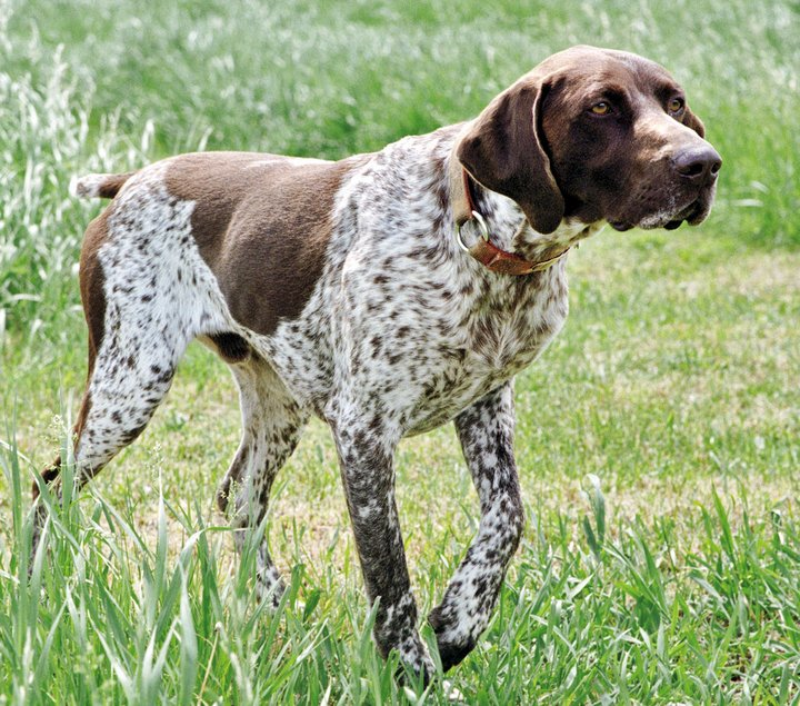 κυνηγετικός σύλλογος Τζερμιάδων για σκύλους