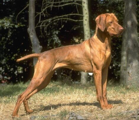 ένα καλό κυνηγόσκυλο κοστίζει πολλά.....