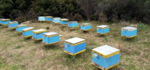 Οδηγίες στους μελισσοκόμους για την τοποθέτηση κυψελών μελισσών