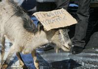 από τη συνάντηση των κτηνοτρόφων