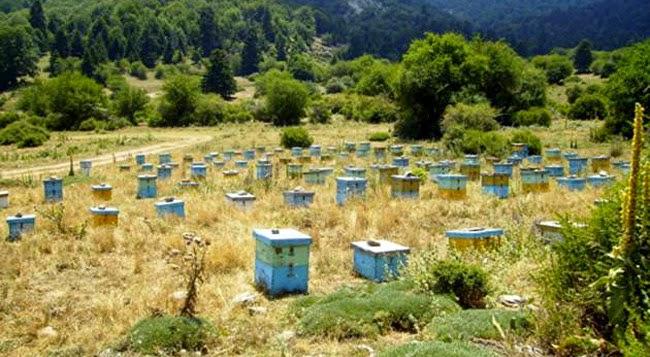 Υπό απειλή ο μελισσοκομικός κλάδος στην Κρήτη και στην υπόλοιπη χώρ