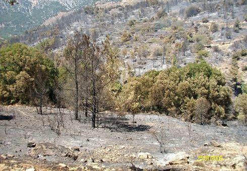 φωτιά στο Σελάκανο