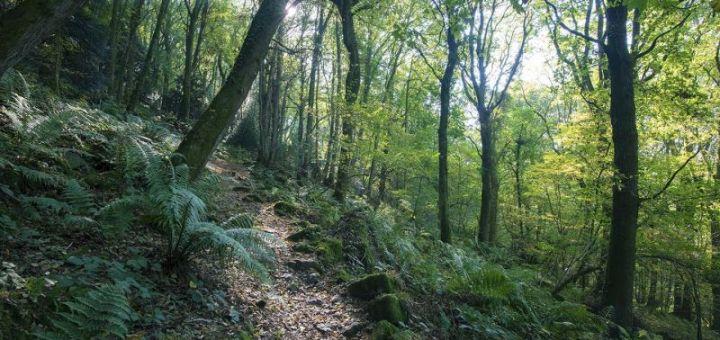 αυτεπάγγελτη αναμόρφωση των δασικών χαρτών της Κρήτης, πρόσκληση