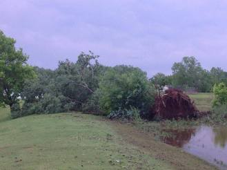 Uprooted tree in Oklahoma after tornado