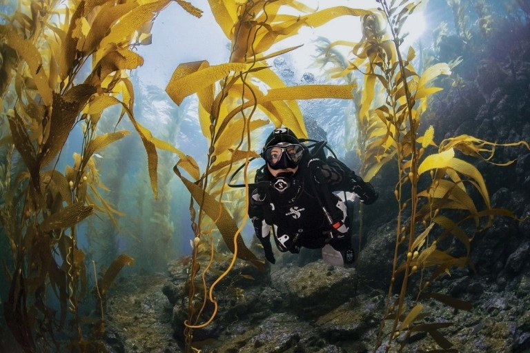10 Best Dry Suit 2020 With Buying Guide-10bestsales
