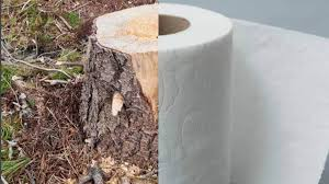 trees turned to toilet paper