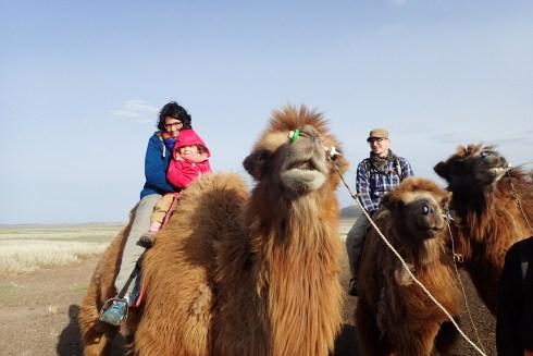 1ère expèrience sur un chameau